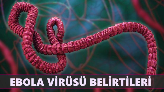 Ebola Virüsü Belirtileri