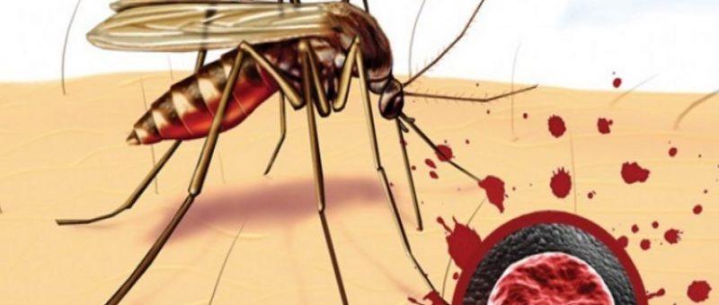 Sıtma Hastalığı Belirtileri