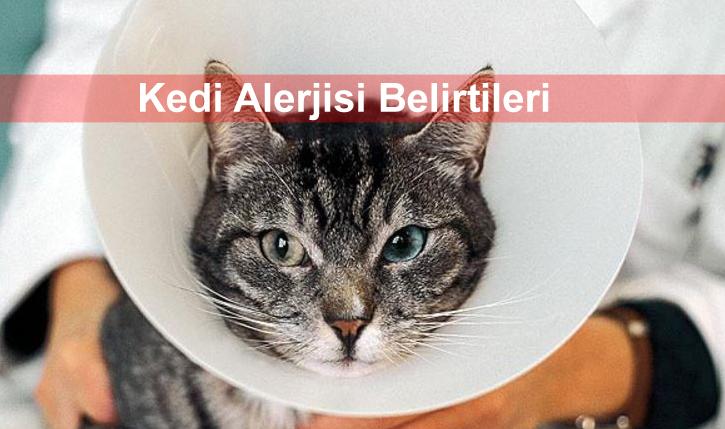 Evcil hayvanlarda hastalıklar: kedi içinde kalsivirüs 53